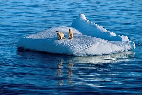 IJsberen op een ijsberg