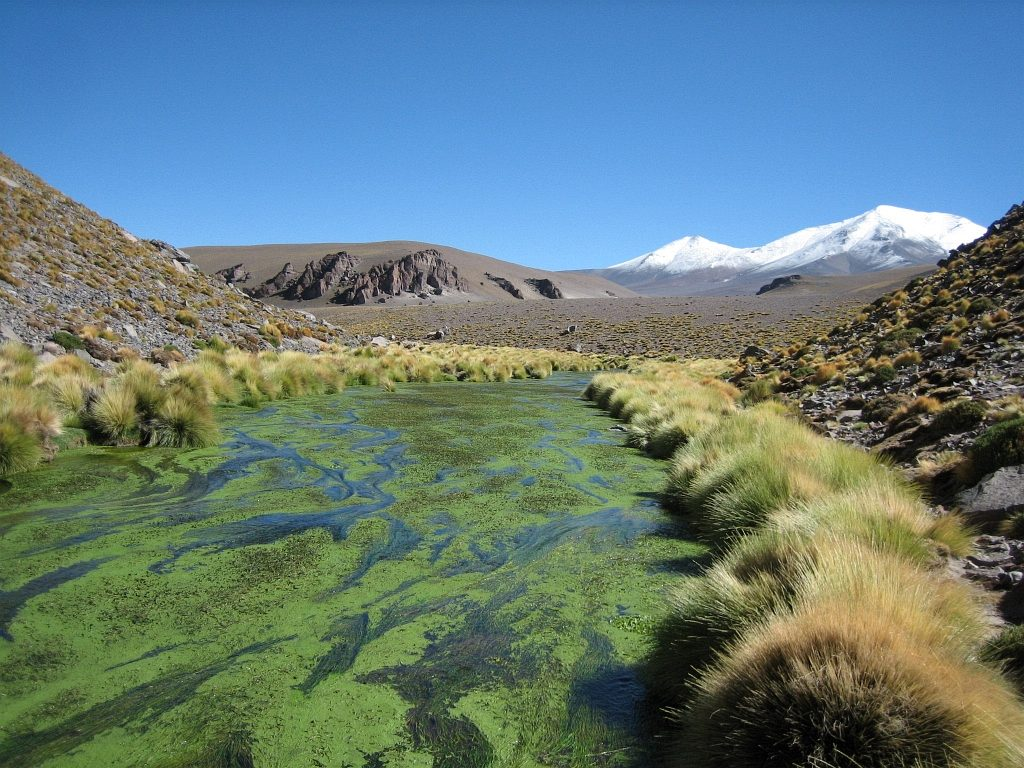 Atacama 2013